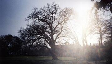 Eiche im Park (Februar/05)