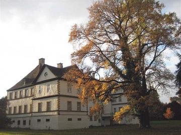 Ilexeiche im Schlosspark Wehrden