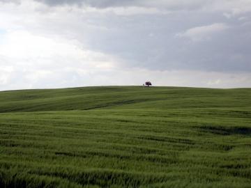 Linde und Bildstock am Horizont eines Gerstenackers. (Mai/06)