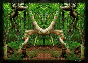 Schöner Baum. Fotografiert von ReinART