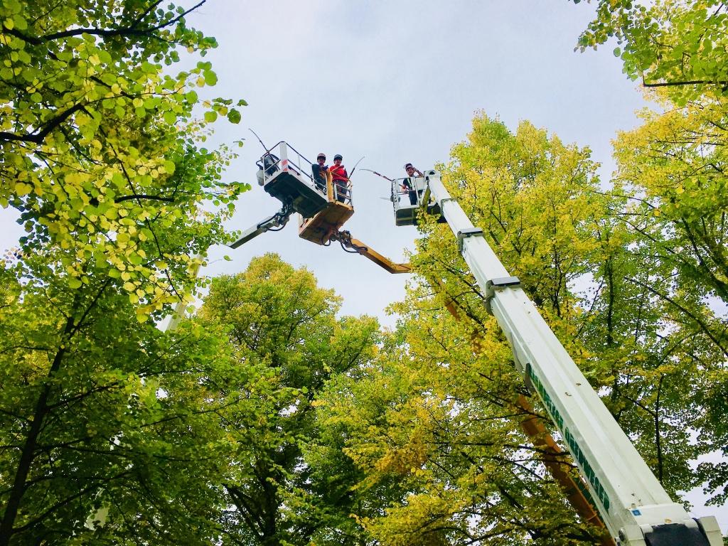 Kletterausrüstung Baumpflege : Mitarbeiter baumpflege oberweser ®